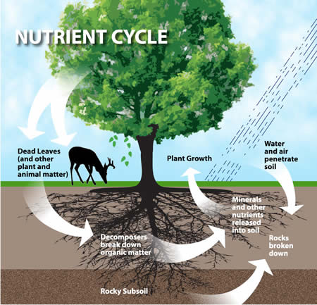 nutrient cycle This is basically how the nutrient cycle works what are the different types of nutrient cycles today due to too much clogging, saturation, pollution and over use of many natural resources we have reverted to recycling of things like paper or plastic.